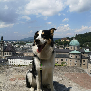 Dog at the Mönchsberg | © Tourismus Salzburg