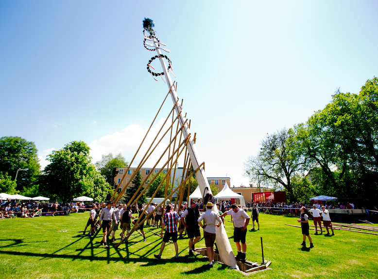 The maypole at the Stiegl brewery  | © Wildbild