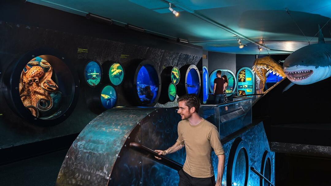نتيجة بحث الصور عن متحف التاريخ الطبيعى فى سالزبورغ